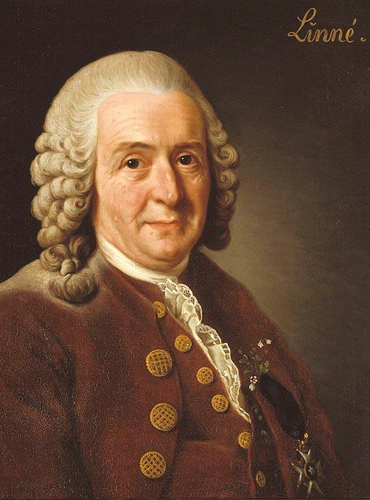 Carl von Linné - Namensgeber der Aloe Barbadensis Linné
