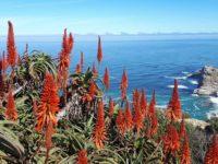 Echtes Urlaubsfeeling: Aloe vera Pflanzen mögen es warm