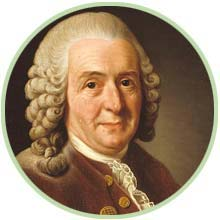 Carl von Linné - Namensgeber der Aloe Vera Barbadensis Miller