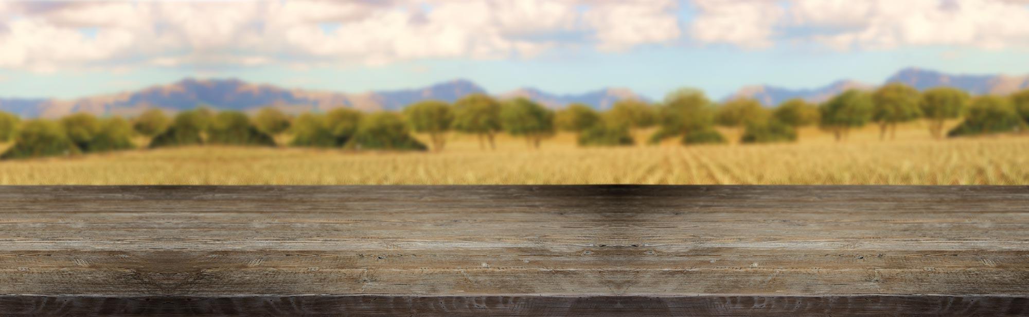 Slider Aloe Vera Farm Hintergrund